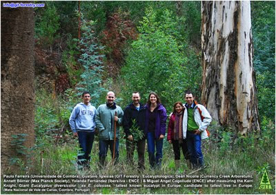 Spanish forester Miguel Angel Cogolludo, Australian botanist Dr Dean Nicolle, German ecologist Annett Boerner, Portuguese chemical engineer Paulo Ferreira and Spanish Forester Gustavo Iglesias identify and measure the Karri Knight, Giant Eucalyptus diversicolor of Portugal, tallest Tree in Europe / El ingeniero de Montes español Miguel Angel Cogolludo, el botanico australiano Dr Dean Nicolle, la ecofisiologa alemana Annett Boerner, el ingeniero quimico portugues Dr. Paulo Ferreira y el forestal español Gustavo Iglesias identifican y miden al Karri Knight, Eucalyptus diversicolor gigante, candidato al arbol mas alto de Europa / Karri Knight, reusachtige Eucalyptus diversicolor boom van Portugal, de hoogste boom in Europa / Karri Knight jättiläinen Eucalyptus diversicolor puu Portugalin korkein puu Euroopassa / Karri Knight Eucalyptus diversicolor arbre géant du Portugal, plus grand arbre en Europe / Karri Knight Eucalyptus diversicolor Baumriesen von Portugal, höchste Baum in Europa / ポルトガルは、ヨーロッパで最も高い木のカリーナイト巨大ユーカリdiversicolorツリー / Кари рыцарь гигантский эвкалипт diversicolor дерева Португалии, высокое дерево в Европе / 卡里骑士巨桉葡萄牙,欧洲最高的树树九孔 / Karri Knight diversicolor cây bạch đàn khổng lồ của Bồ Đào Nha, cây cao nhất tại châu Âu / Karri Knight jätte Eucalyptus diversicolor träd i Portugal, högsta träd i Europa / O Karri Knight arvore de eucalipto diversicolor de Portugal, a árvore mais alta na Europa / Gustavo Iglesias Trabado / GIT Forestry Consulting, Consultoría y Servicios de Ingeniería Agroforestal, Galicia, España, Spain / Eucalyptologics, information resources on Eucalyptus cultivation around the world / Eucalyptologics, recursos de informacion sobre el cultivo del eucalipto en el mundo
