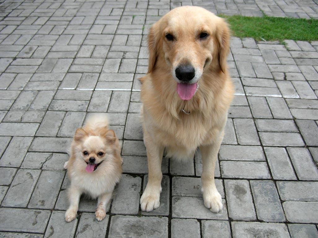 Terciptanya anjing dan asal-usul mengapa anjing jadi najis