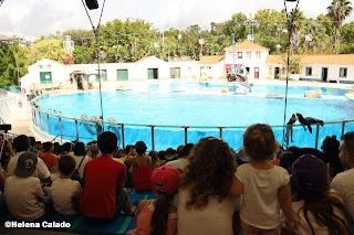 fotografia da baia dos golfinhos