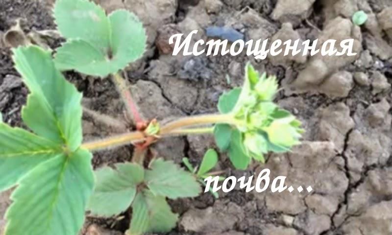 Поздравление по телефону на украине 520