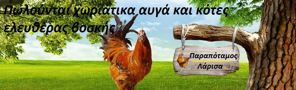 Πωλούνται αυγα χωριάτικα και κότες ελευθέρας βοσκής