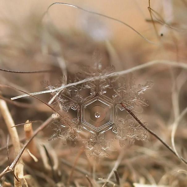 снежинка макро