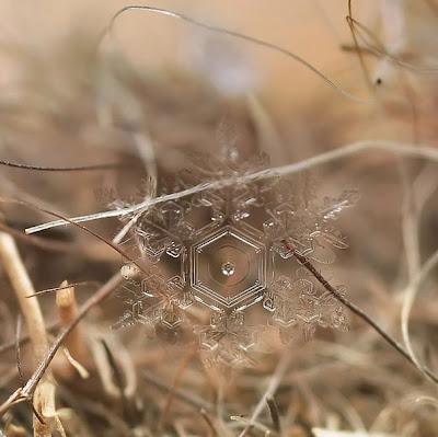 снежинка snowcrystals
