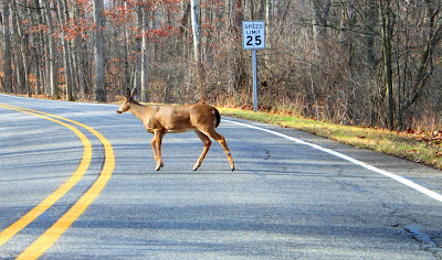 4 Safe Driving Tips During Michigan Deer Season