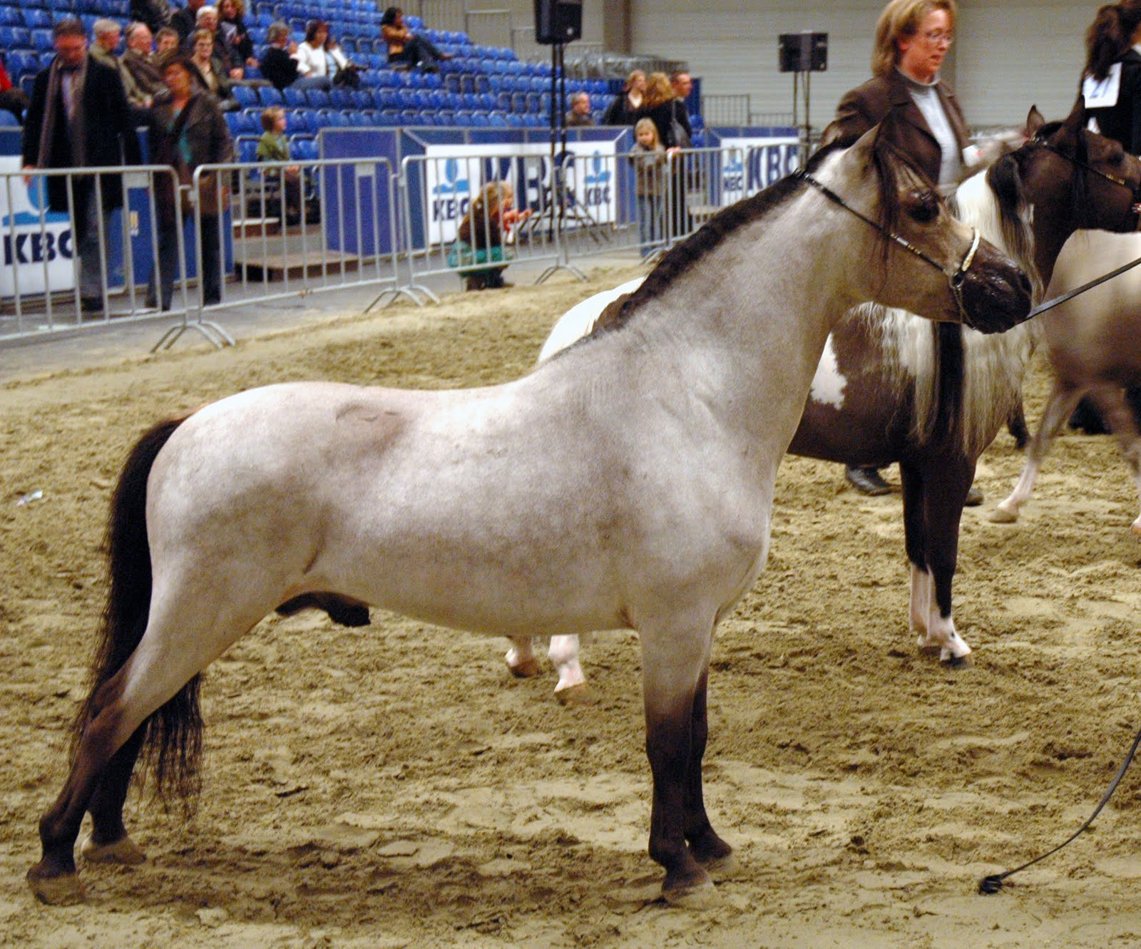 Beautiful Miniature Horse