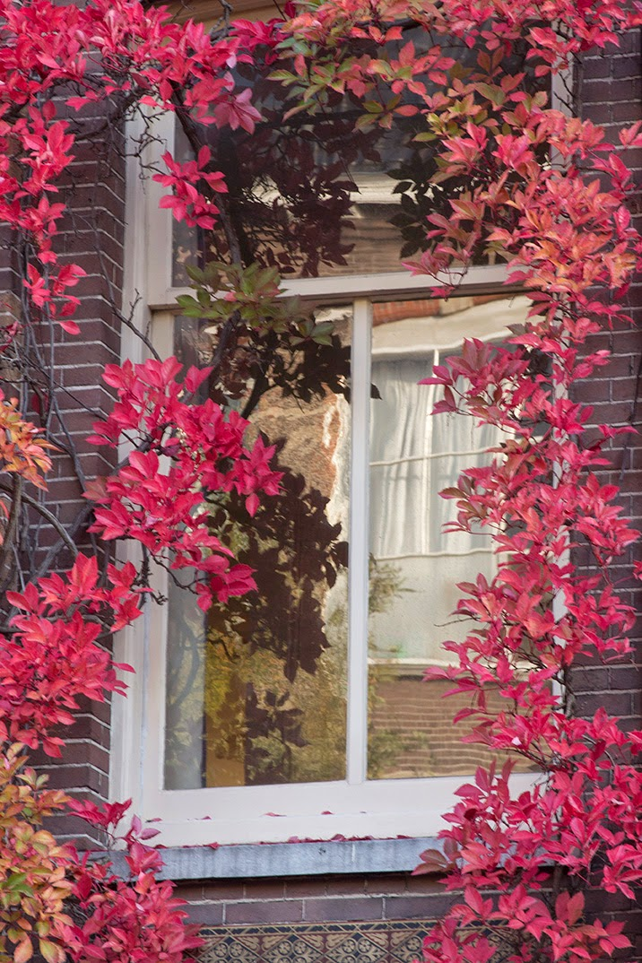 window with red ivy