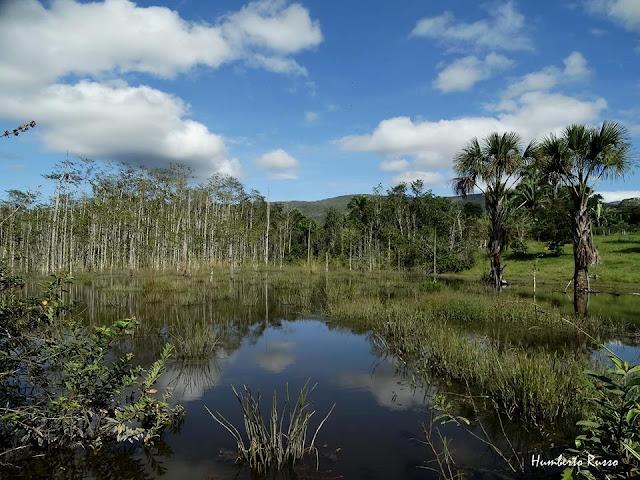 Vereda em Cavalcante de Goiás fotografada por Humberto Russo