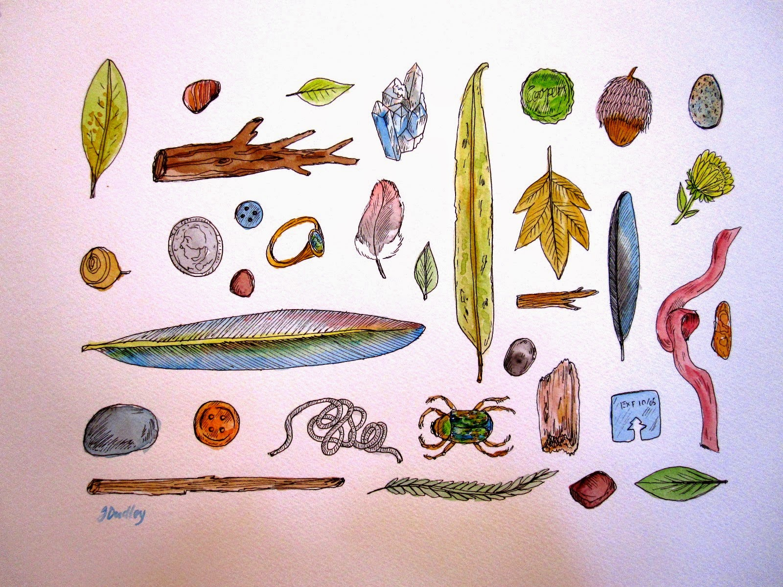 Coloured sketches of  range of little things including leaves, shells, feathers and bugs.