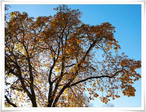 Höstigt träd i parken