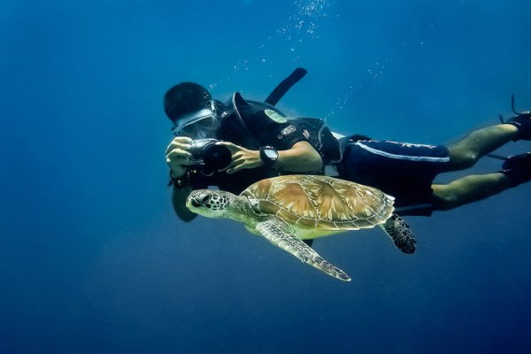 Diving in turtle cavern
