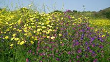 Brassée de fleurs sauvages