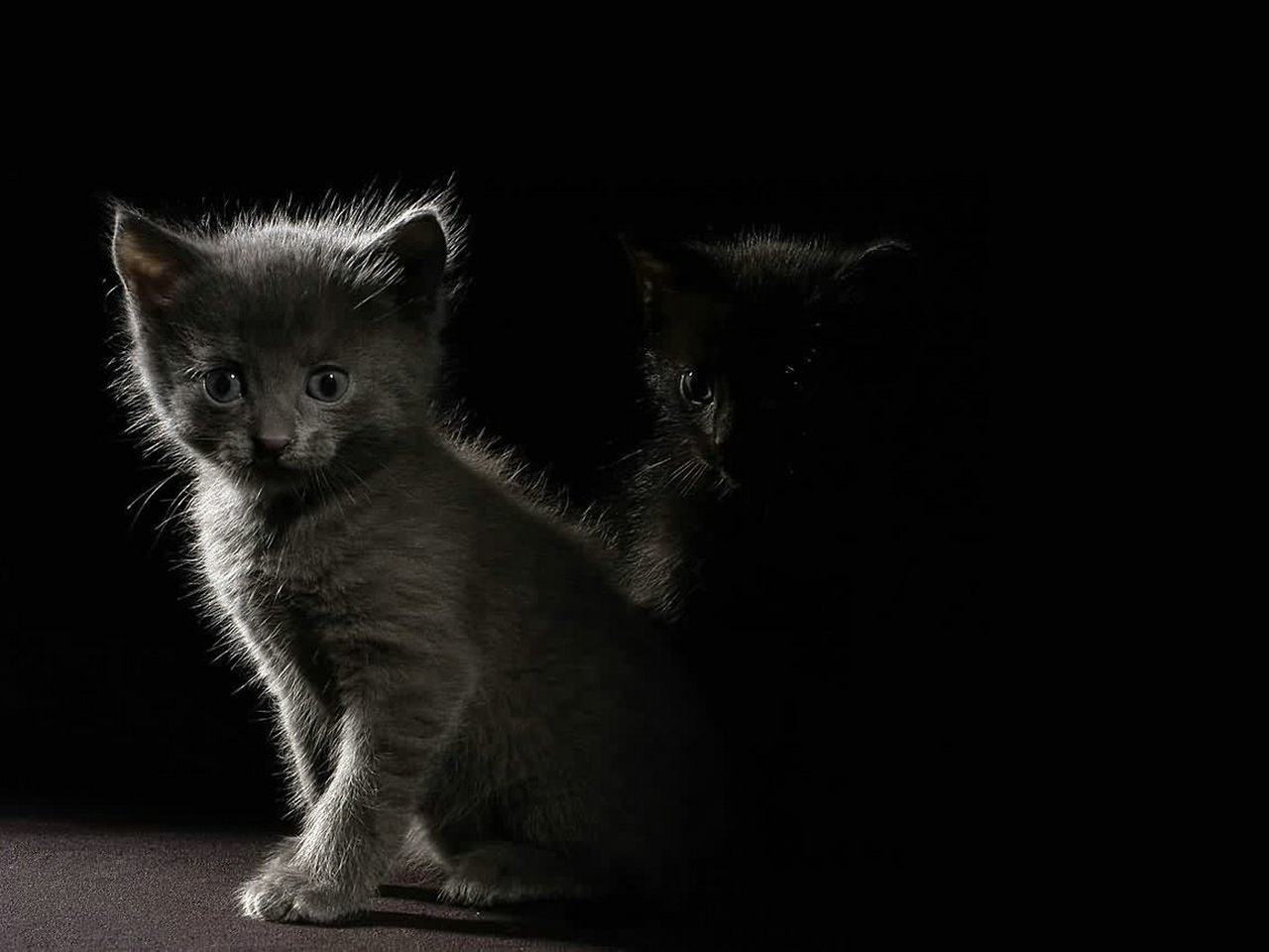 http://3.bp.blogspot.com/-fHuqooIZSaI/TjOF12mKS0I/AAAAAAAAADo/aEXf_VLTxJ4/s1600/ws_Kittens_in_the_dark_1280x960.jpg