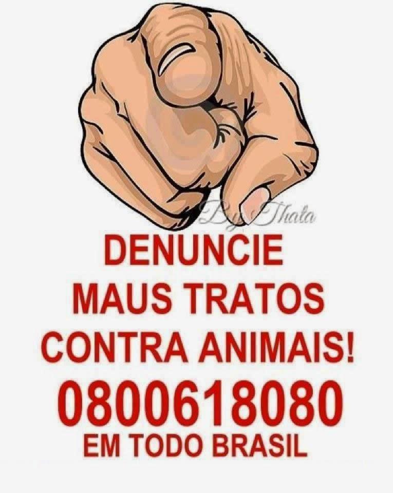 DENUNCIE MAUS TRATOS COM ANIMAIS :