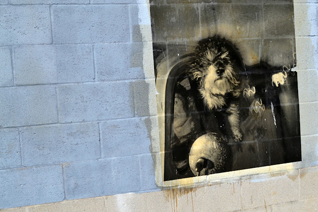 city, street art, urban, dog, photo