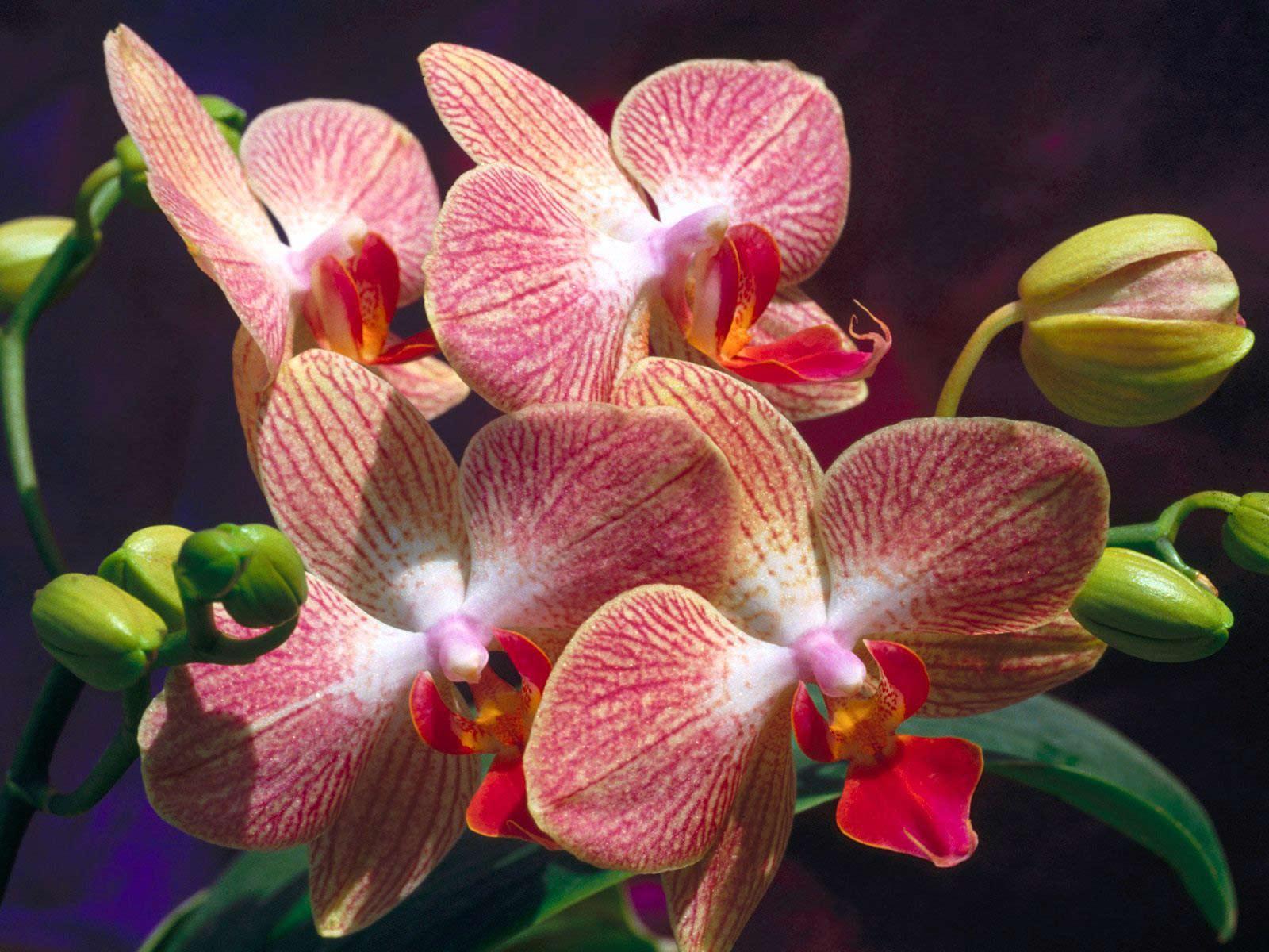 http://3.bp.blogspot.com/-fILQhrpWnx0/TePlP3mXl1I/AAAAAAAAAEc/dfRliKwFSaM/s1600/Flowers-Orchids-flowers-wallpapers.jpg