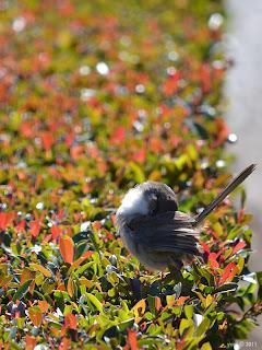 very tiny bird