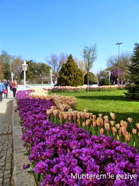 Tulip Time in Emirgan