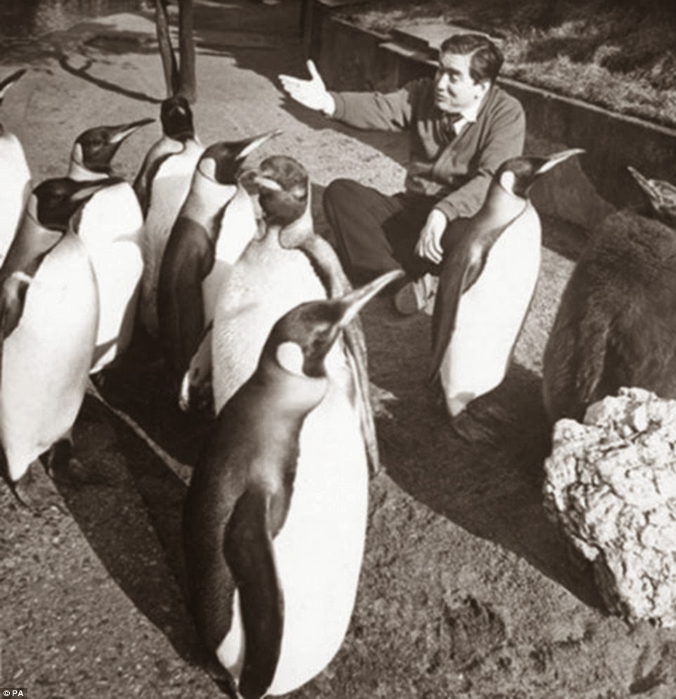 Tony Hancock with a group of penguins - George Douglas