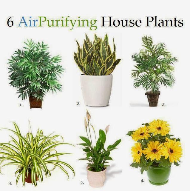 indoor plants nasa - photo #1