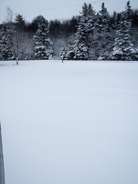 Yard in snow