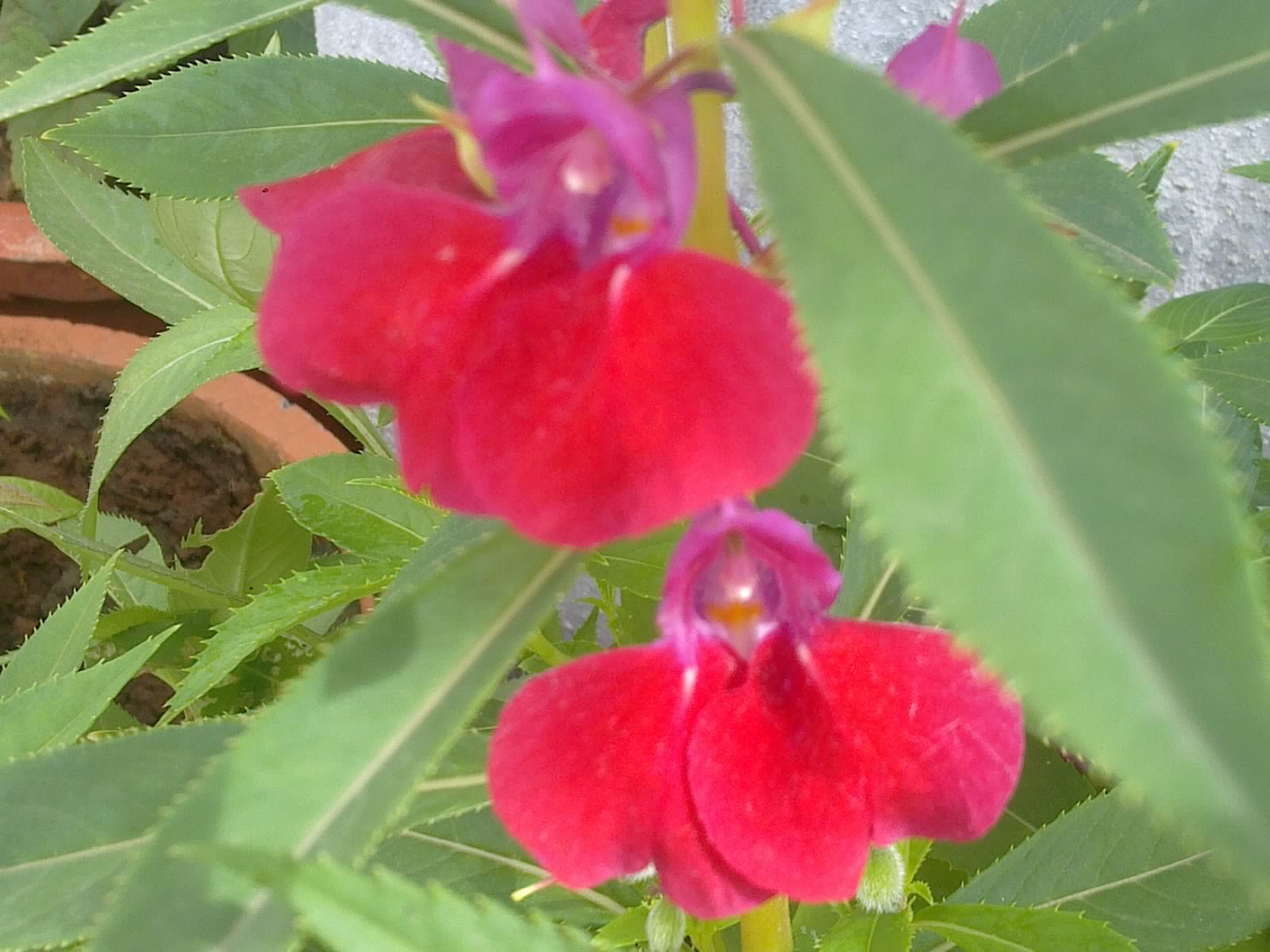 Plants Growing In My Potted Garden.: How to grow and care for garden ...
