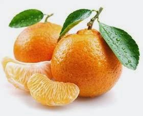 Cachorro pode comer laranja?