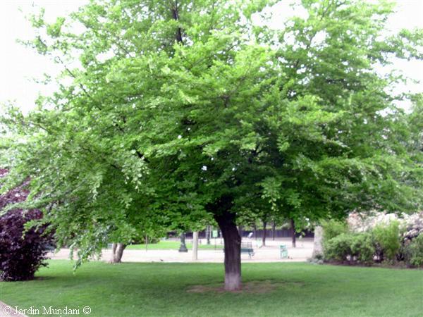 Bosque caducifolio for Arboles con sus nombres y caracteristicas
