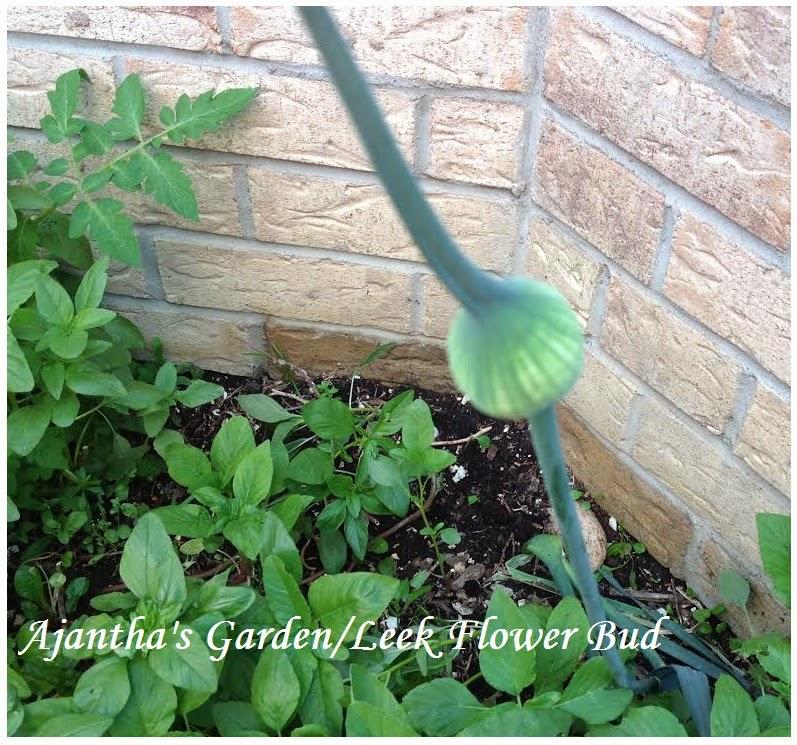 Ajantha's Garden/Leek Flower Bud