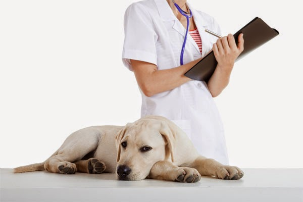 Vet, Medications for Pet, Flea Medications advice, Online Pet Medication, Frontline Plus for large Dog, large Dog Medications