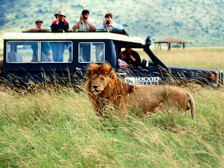 Safari in Kenya, holiday in africa, safari photo en Afrique