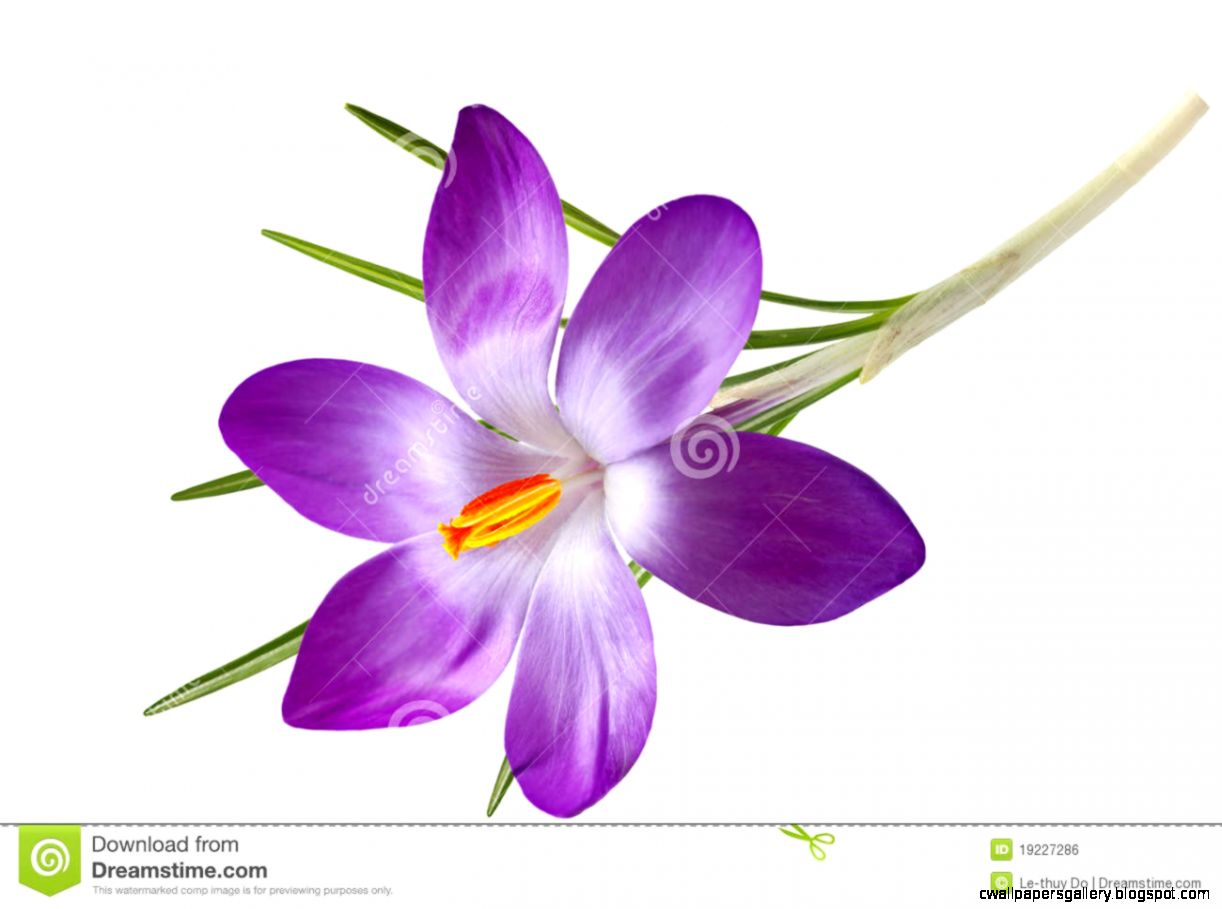 Single Purple Flower Clipart