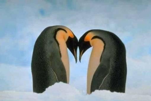 Biarkan Cinta Merajai Dunia -- foto bugil telanjang bulat -- faceleakz