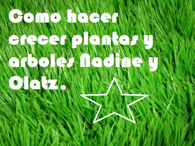 Todo sobre plantas Nadine y Olatz