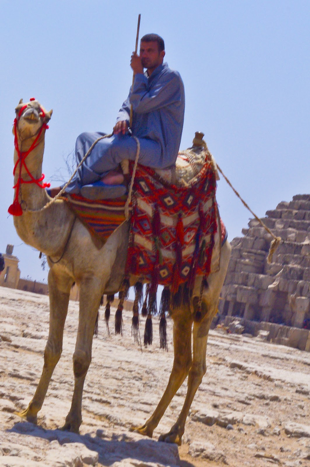 after an exciting morning of that included not only pyramid viewing but racing a guy on a camel in the car he won those things can move we traveled on