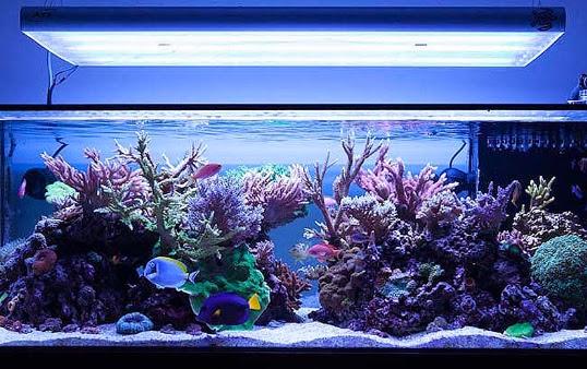 Saltwater Fish Tank Yahoo Retail Saltwater Aquarium