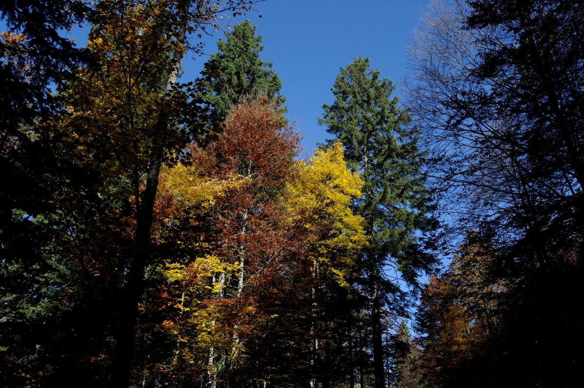 I colori dell 39 autunno al passo della pura le foto del vanni for Colori del rivestimento della baracca