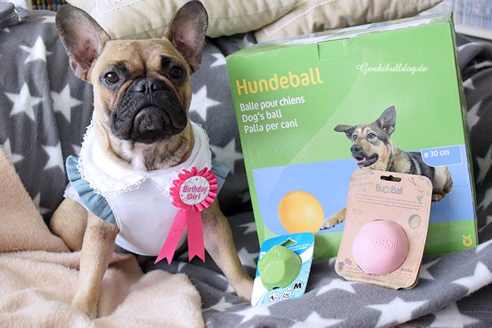 Geburtstag Hundeblog Französische Bulldogge Momo