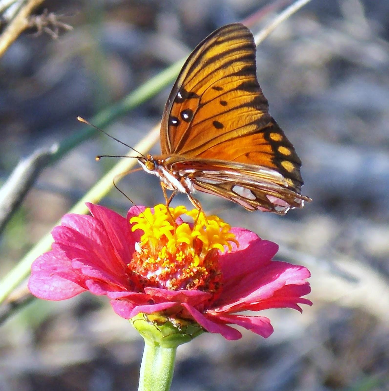 Study of butterflies -- Crossword clue | Crossword Nexus