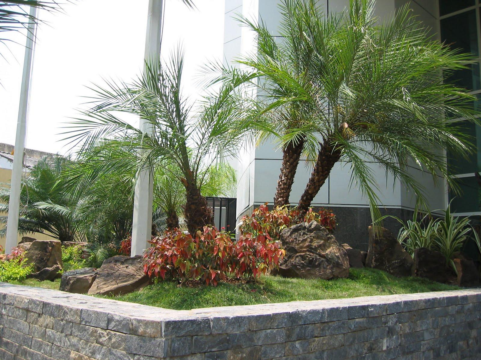 La tiendita del bonsai y paisajismo for Paisajismo jardines fotos