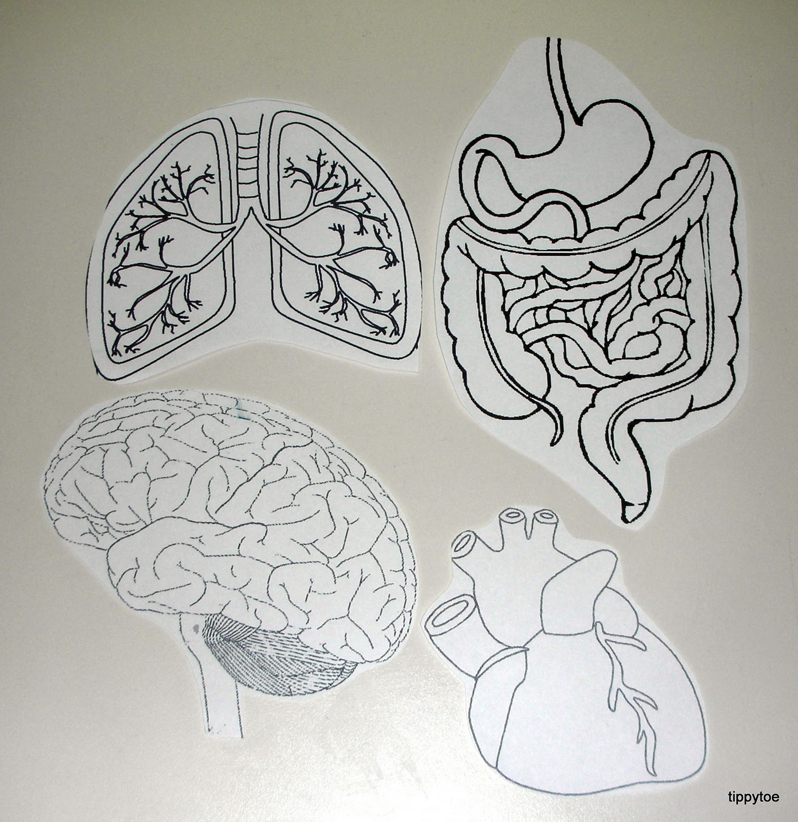 Human Organs Coloring Pages For Kids