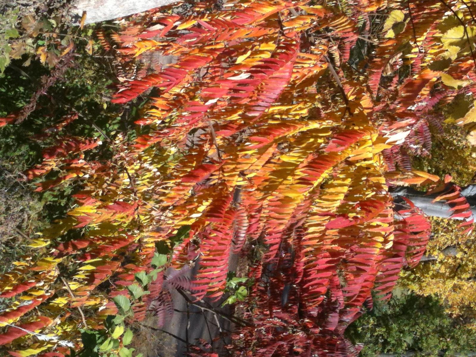 Autumn leaves essays