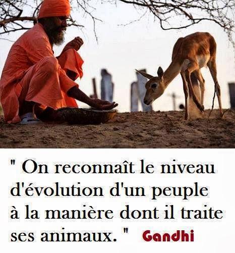 http://3.bp.blogspot.com/-fMCjSM9JBvU/UmfGh_1hKJI/AAAAAAAAj6k/Pkxo9WLRnts/s1600/a++gandhi+animaux.jpg