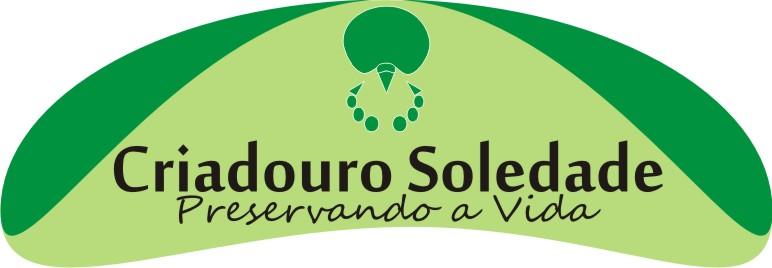 Criadouro Soledade - Budgerigar