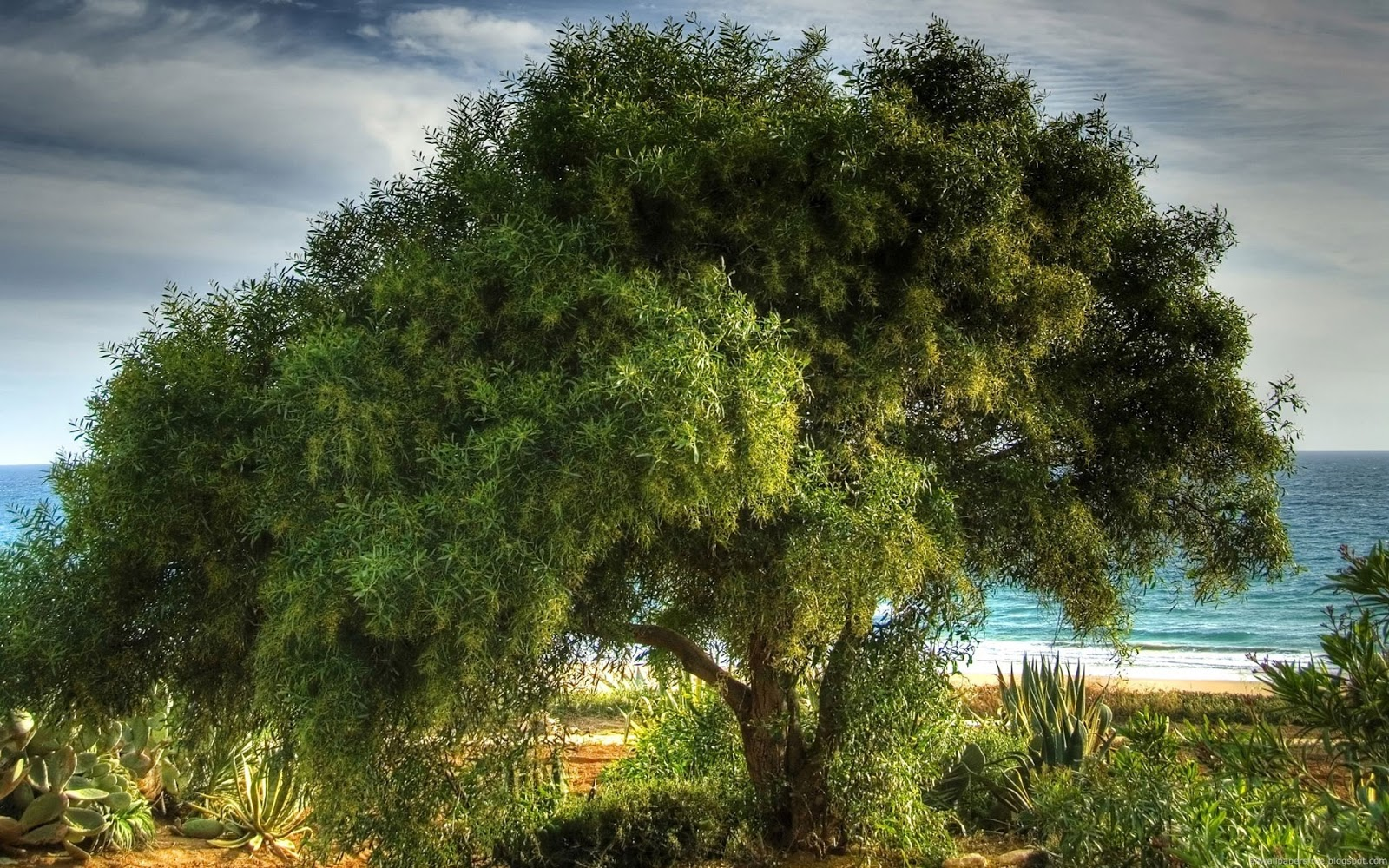 tree hd wallpapers - photo #28