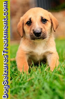 www.dogseizurestreatment.com