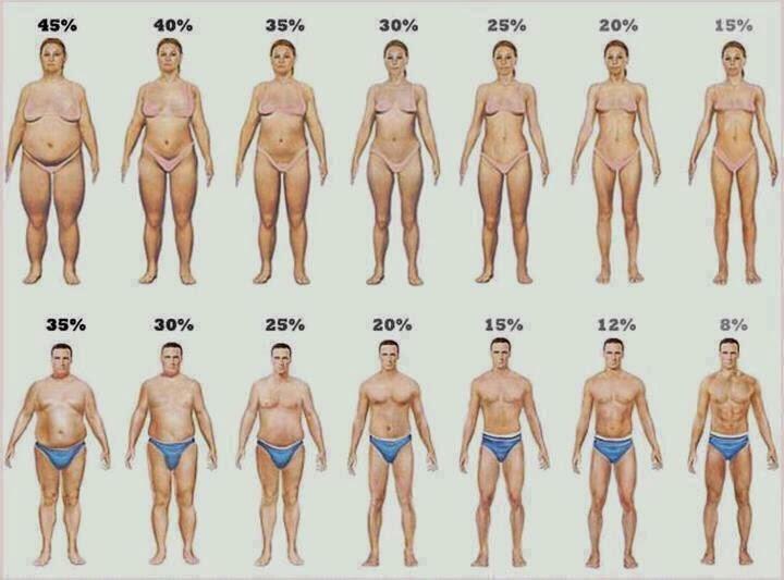 Φυσιολογικό ποσοστό λίπους