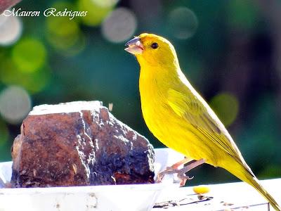 Pássaro que vivem na Praia do Cassino