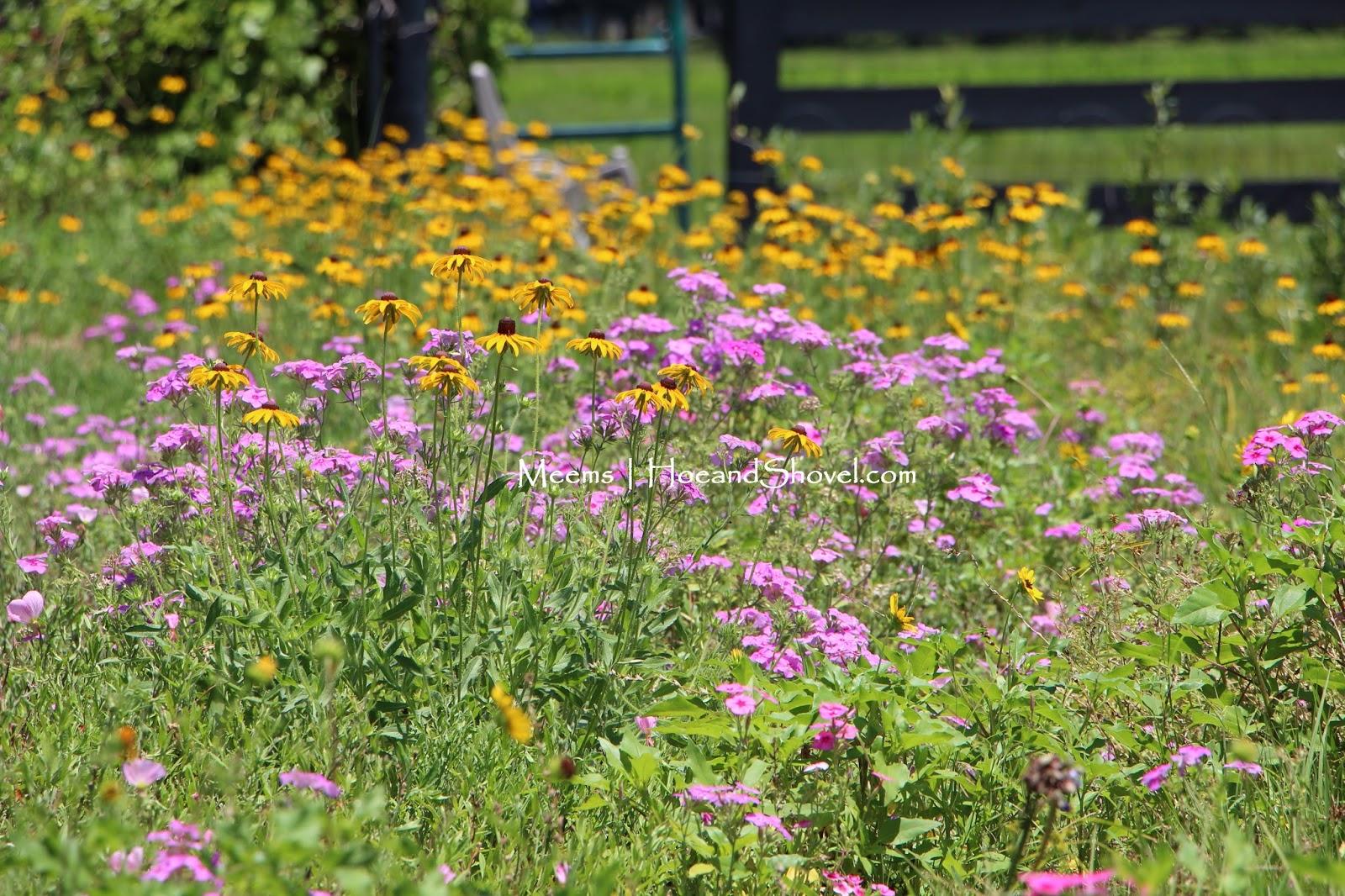 how to plan a wildflower garden