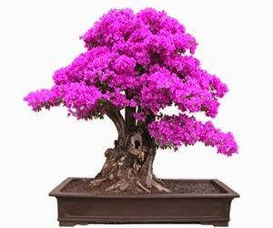 """<img src=""""bonsai24.jpg"""" alt=""""foto bonsai"""">"""