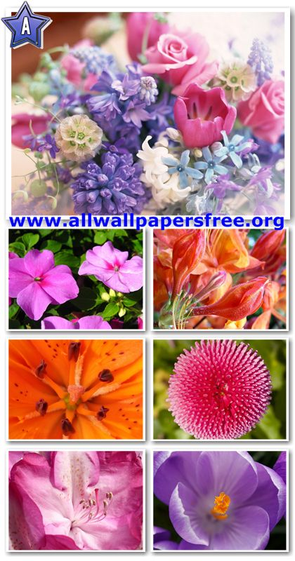 100 Beautiful Flowers Wallpapers 1280 X 1024 [Set 9]